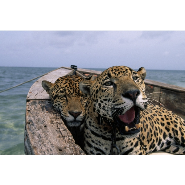 N47 - 100 photos de National Geographic